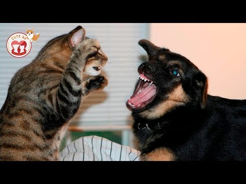 TOP HIGHLIGHTS of Dogs & Cats - Funny Animal Compilations