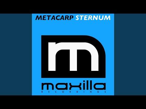 Sternum (Original Mix)