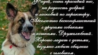 Фадейюшка ищет Дом. История одной собаки.mp4