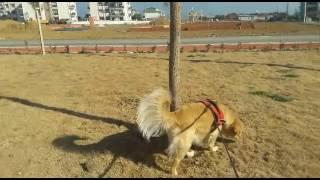 """"""" Eve Yeni Gelen Yavru Köpek İçin Neler Yapılmalı?"""" Konulu Eğitim Videomuz"""