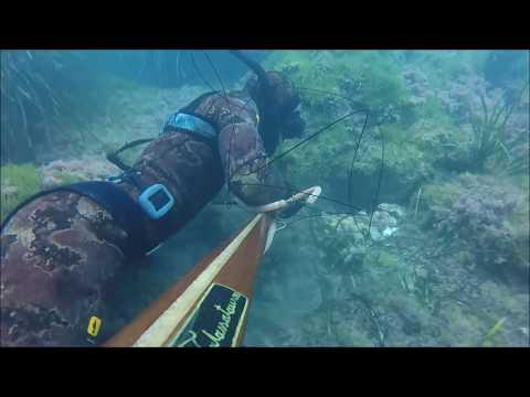 Pesca sub punta secca polpo di 3 kg