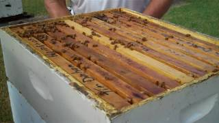 Durham's Comb Honey