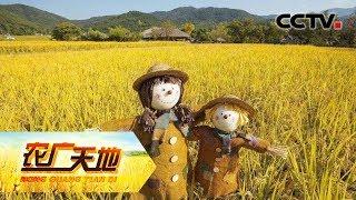《农广天地》 20190630 能赚钱的稻草人| CCTV农业