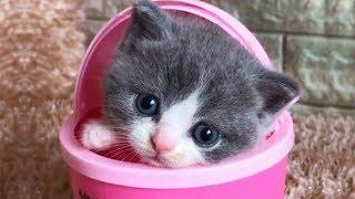 おかしい猫 - かわいい猫 - おもしろ猫動画 HD #216 https://youtu.be/7...
