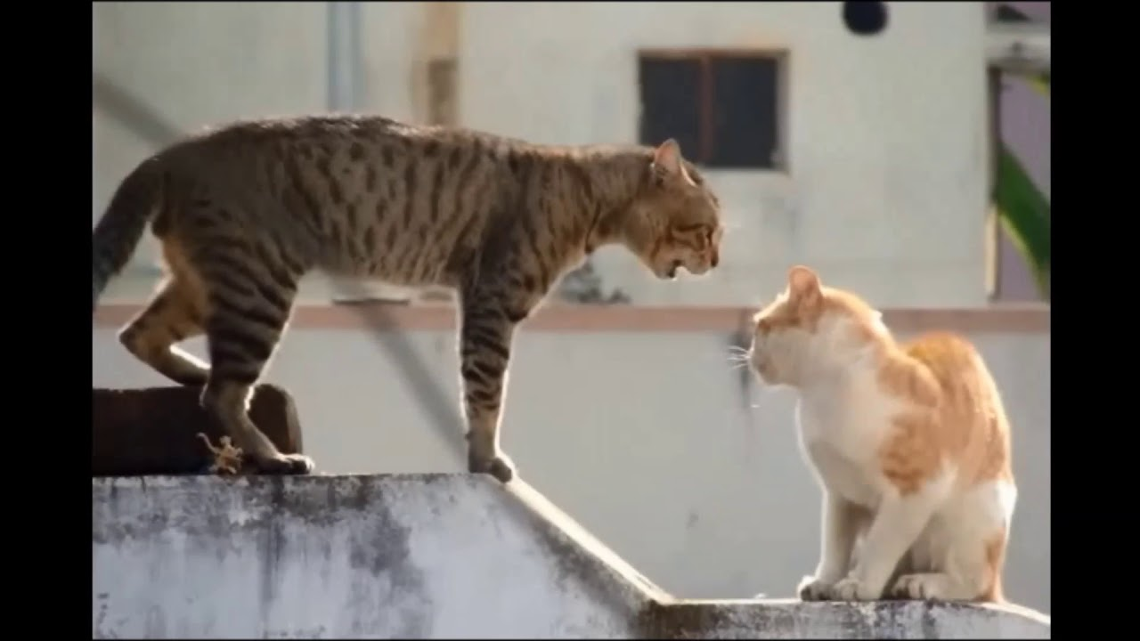 Download 89+  Gambar Kucing Lucu Kaget Paling Baru HD