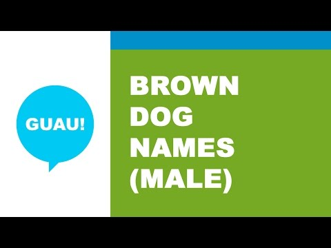 Male names for brown dog - the best names for your pet - www.namesoftheworld.net