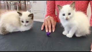 KITTENS: Vet Examines Kittens on National Take Your Cat To The Vet Day | The Dodo LIVE