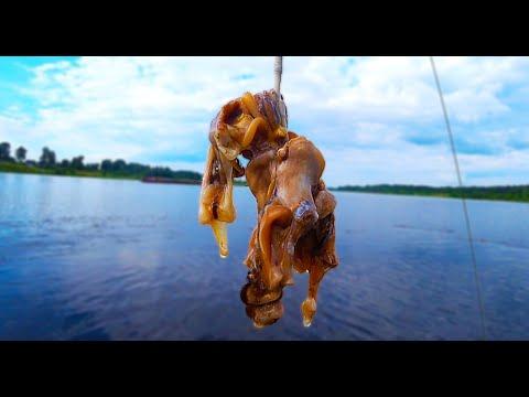 Ловля СОМА на РАКУШКУ на Западной Двине 2021. Наживка и снасть на сома. Рыбалка в Беларуси