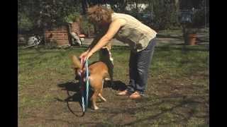 Dog Training In San Antonio Area