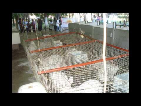 VIDEO DE INSTALACION MANTO ASFALTICO NEOCRET.wmv de YouTube · Alta definición · Duración:  5 minutos 47 segundos  · Más de 272.000 vistas · cargado el 10.11.2011 · cargado por Gabriel Motta