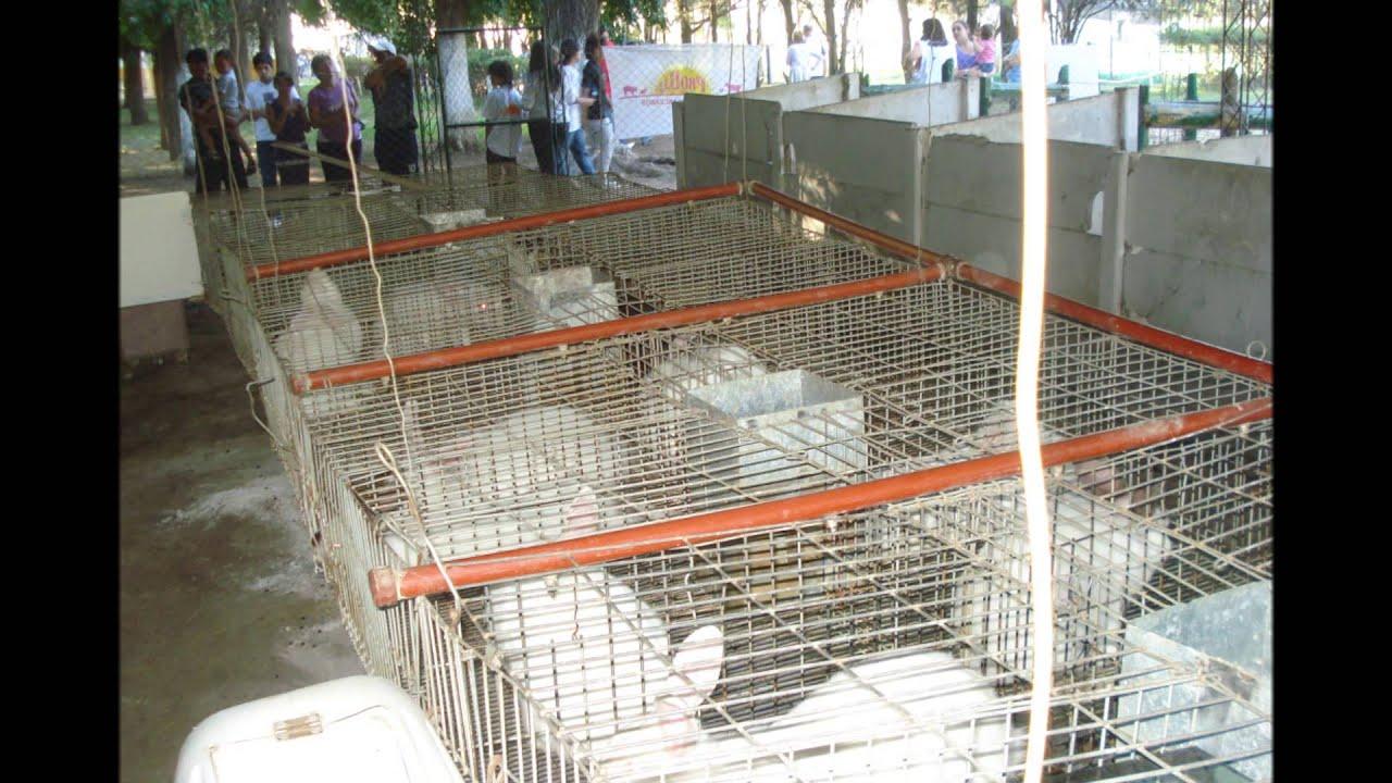 Cr a de conejos para producci n de carne youtube - Casas para conejos enanos ...