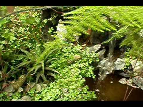 jardines en miniatura santuario
