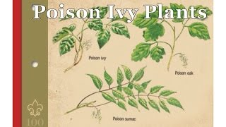 Survival Skills 101: How to Identify Poison Ivy, Poison Oak & Poison Sumac
