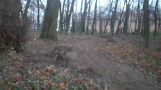 Tomaszowice park