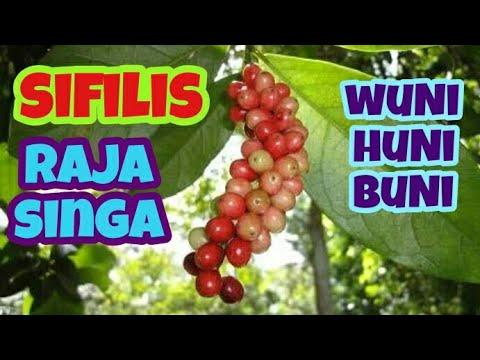 #sifilis-#rajasinga-sifilis-||-raja-singa-cukup-dengan-buah-wuni-[buni]-[huni]