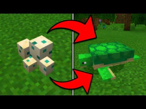 How To Hatch A Turtle Egg In Minecraft Pocket Edition (1.5+)