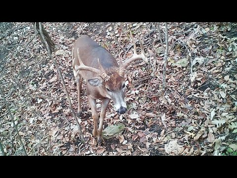 Deer Moving Through This 29 Acre Property For Sale In Allamakee County, IA