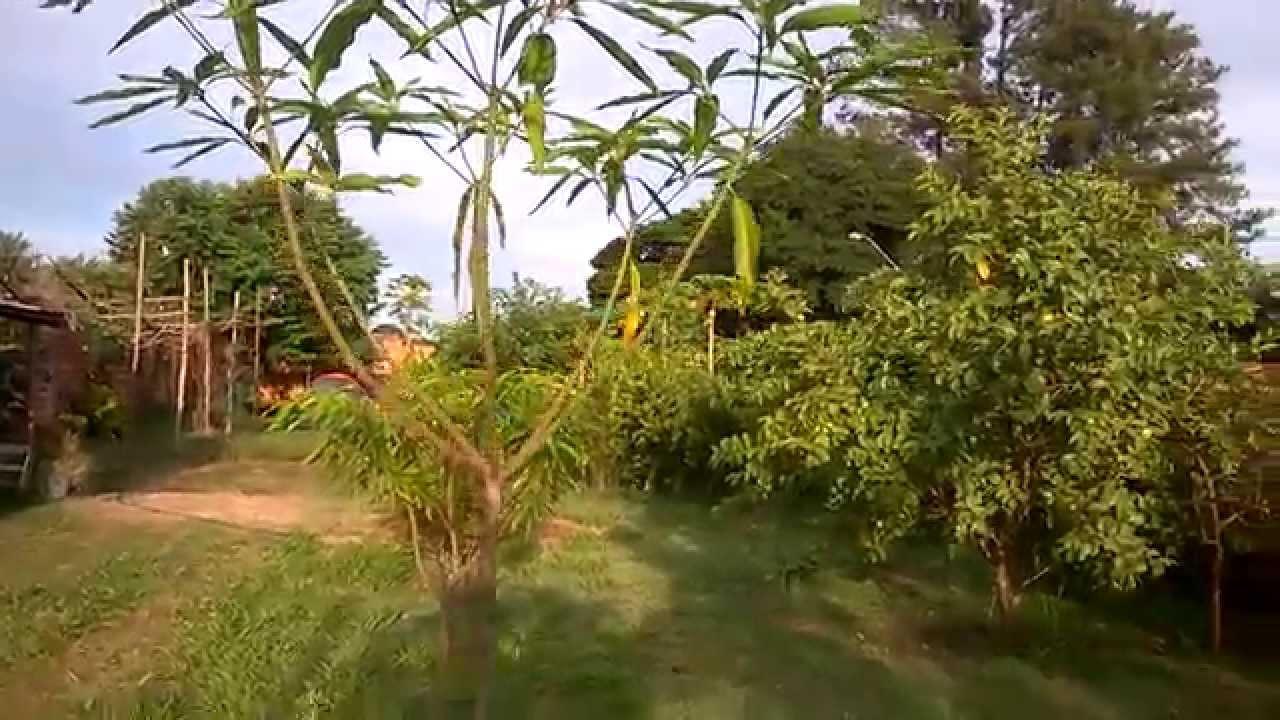Poda de forma o da mangueira youtube - Poda de hortensias epoca ...