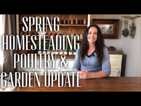 WHAT HAPPENS ON A SMALL HOMESTEAD IN SPRING - Poultry & Food Garden Update