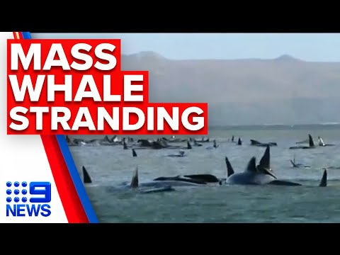 270 whales stranded