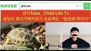 호스필드 육지거북 turtle 3탄 - 치커리 먹이 주…