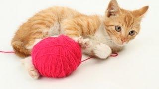 Игра Кошки Мышки. Реальное Видео - 5