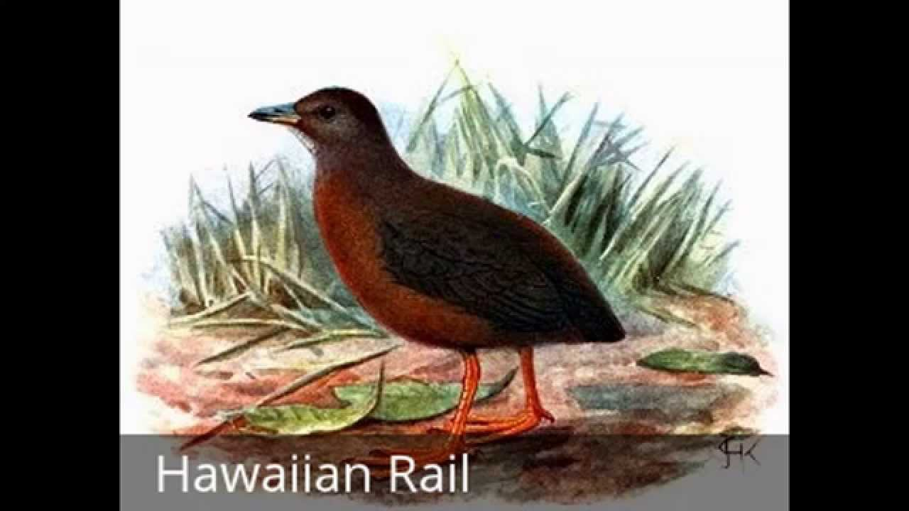 15 Extinct Birds - Birds We Have Not Seen And Never Will -8180