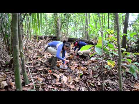 Pan collecting leaf litter samples