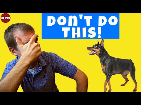 Puppy Potty Training: 5 Mistakes to Avoid with Your Miniature Pinscher