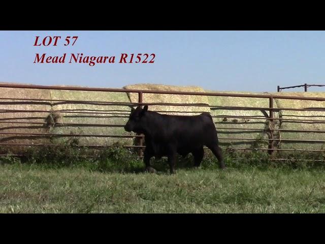 Mead Angus Lot 57