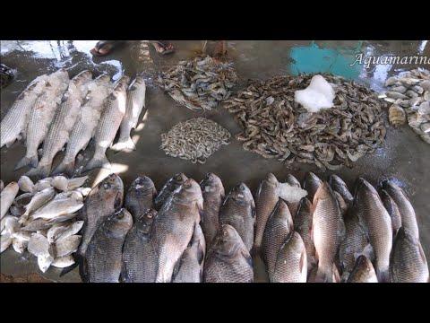 Fish Market In India - Fresh Water & Brakish Water Fish Varieties