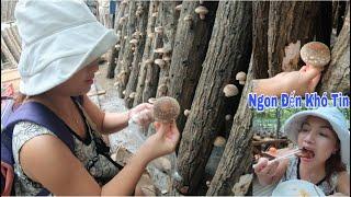 🇯🇵Hái Nấm Hương Tươi Nướng & Ăn Ngay Tại Vườn Ngon Đến Khó Tin #342