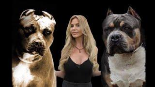 DOG KILLERS?  AMERICAN PITBULL TERRIER Vs AMERICAN BULLY DOG
