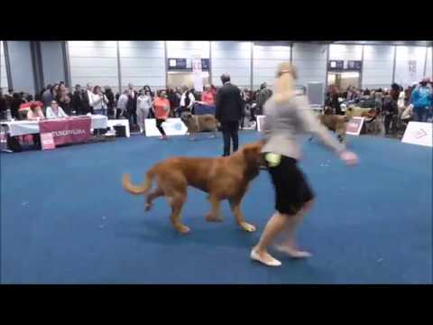 World Dog Show Leipzig - Germany, 12.11.2017