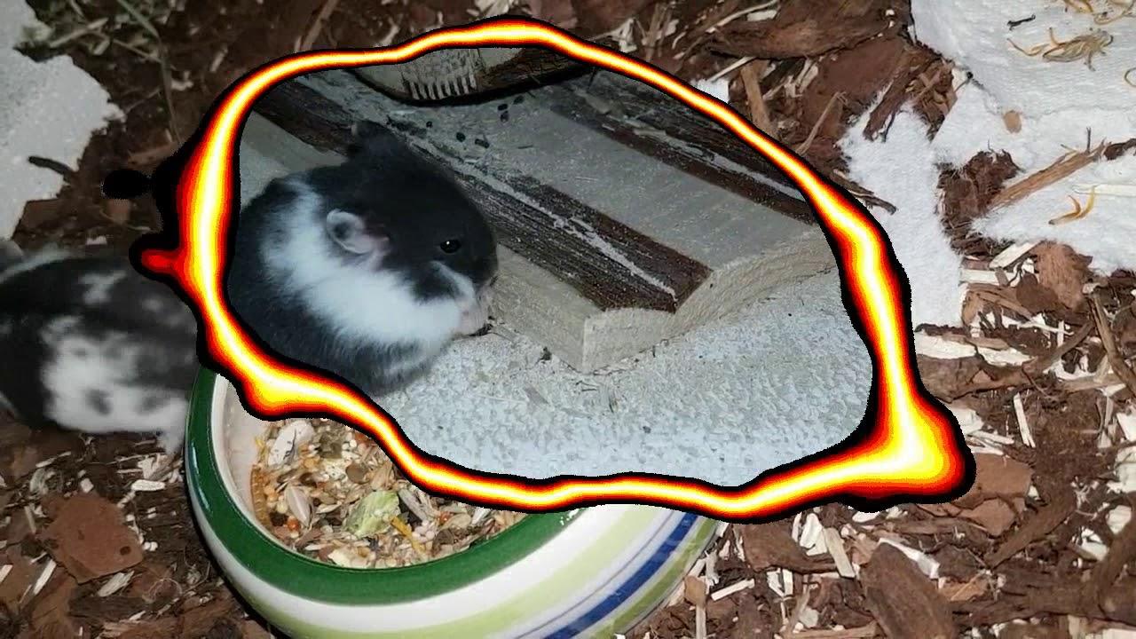 Manuela S Small Pet World