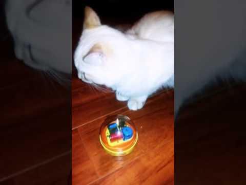Kitten meets Mr. Rogers Music box
