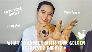 Things You Must Know about a GOLDEN RETRIEVER PUPPY PHILIPPINES   What To Expect
