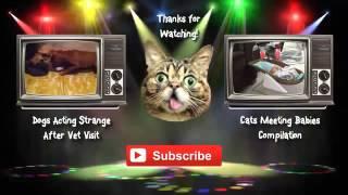 FANNY CATS VIDEO FANNY CATS COMPILATIONS FANNY VIDEO Funny Animals Funny Pranks Funny Fails