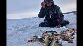 НЕ ШОК ОНИ ЛЕЗУТ В ЛУНКИ И НЕ РАЗГИБАЮТ КРЮЧКИ Рыбалка 2020 ловля окуня плотва безмотылка Обь