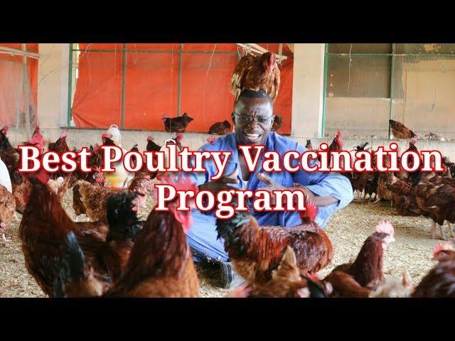 Best Poultry Chicken Vaccines Program /Schedule/Chart