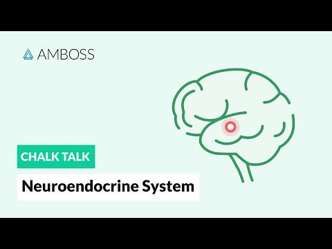 The Neuroendocrine System: Regulatory Processes
