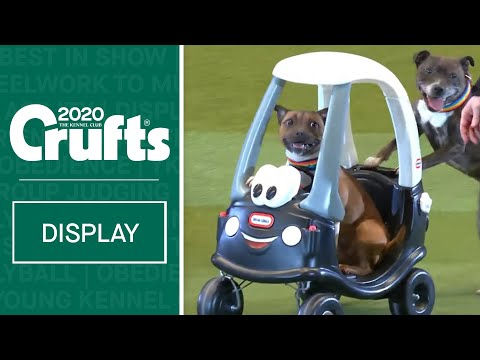 Staffordshire Bull Terriers take over Crufts 2020