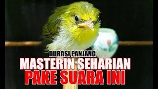 Gambar cover DIMASTER SEHARIAN PAKE SUARA TILULIT BREN SUPAYA CEPAT MASUK DAN MENJADI PLECI YANG ISTIMEWA