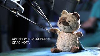 Хирургический робот спас кота