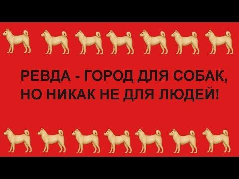 РЕВДА - ГОРОД ДЛЯ СОБАК, НО НИКАК НЕ ДЛЯ ЛЮДЕЙ!