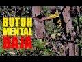Butuh Mental Baja Berburu Anakan Burung Di Pohoh Rapuh Dan Berduri  Mp3 - Mp4 Download