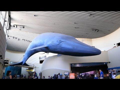 Aquarium of the Pacific- Long Beach Aquarium