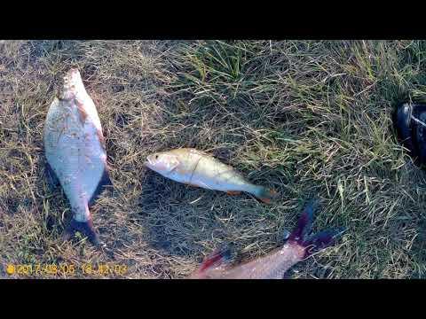BigFish1.ru