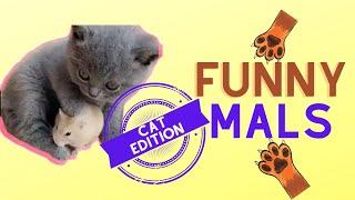 😹 Funny Animals \u0026 Cute Pets Cat Edition pt4😹 ( New Cool Merch in the Description below )