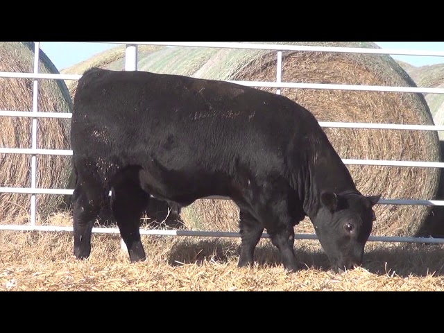 Express Ranches Lot 354